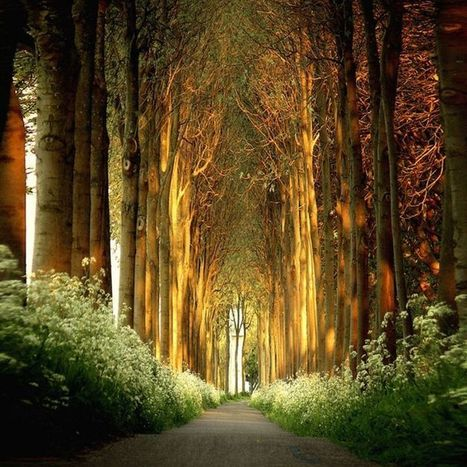 12 Amazing Tree Tunnels You Should Definitely Take A Walk Through | Nature Sights | Trips | Scoop.it