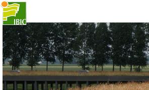 Les toitures végétales Ibic avec Br1o   Le portail du voyage   Scoop.it