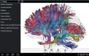 Best Free Android Neuroscience Apps - NeuroRelay | Bounded Rationality and Beyond | Scoop.it
