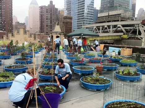 PHOTOS: Farming On Church's Roof Provides Food For A Hungry Community | Vertical Farm - Food Factory | Scoop.it