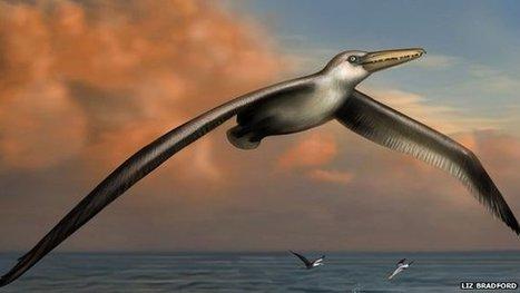'Largest flying bird' identified | Sharks | Scoop.it
