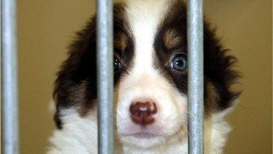 Stray dogs 'still major UK problem' | Dogs | Scoop.it
