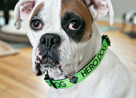 Minnesota company wants to bring out the 'Hero' in rescue dogs - Rick Kupchella's BringMeTheNews | Dog Love | Scoop.it