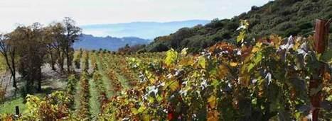 The Best Californian Wine Region You've Never Heard of   Vitabella Wine Daily Gossip   Scoop.it