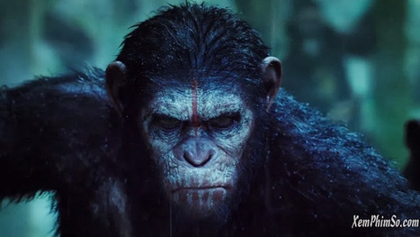 Xem Phim Dawn Of The Planet Of The Apes | | tung | Scoop.it