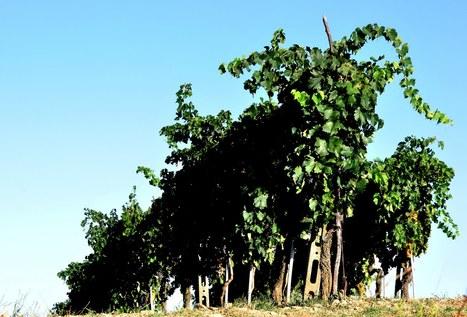 UN CONCOURS ORIGINAL DE COURT-METRAGES DANS LE LANGUEDOC-ROUSSILLON | Actualités du monde viticole | Scoop.it