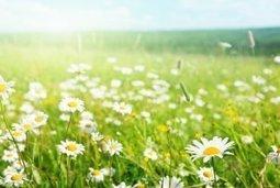 Allergies aux pollens : des messages à faire passer | Toxique, soyons vigilant ! | Scoop.it
