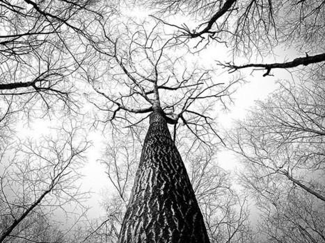 La extrema delicadeza de un árbol | Agua | Scoop.it