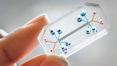 Building a Full-Blown Human Body-on-a-Chip | DiscoverMagazine.com | Hawaii Science and Technology Digest | Scoop.it