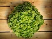 Da haben wir den Salat   Agrarforschung   Scoop.it
