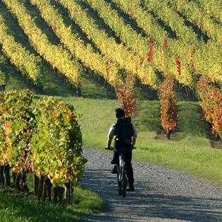 Route du vignoble en Anjou et des vins du Val de loire | Le tourisme viticole | Scoop.it