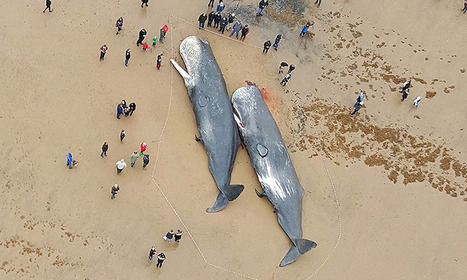 Pollution sonore : comment l'Homme bouleverse la vie océanique | Les coups de coeur de D'Dline 2020 | Scoop.it
