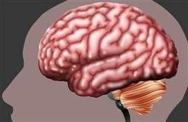 Scientists show they can 'read your mind' using brain scans - NBC News.com   Heal the world   Scoop.it