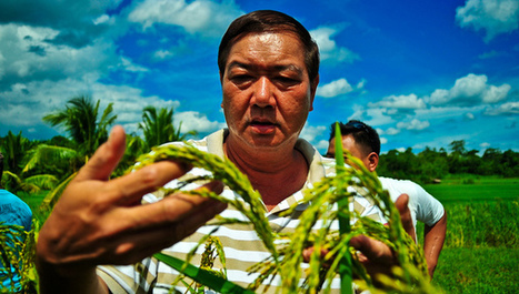 Exploration urged to discover new rice species   Agricultural Biodiversity   Scoop.it