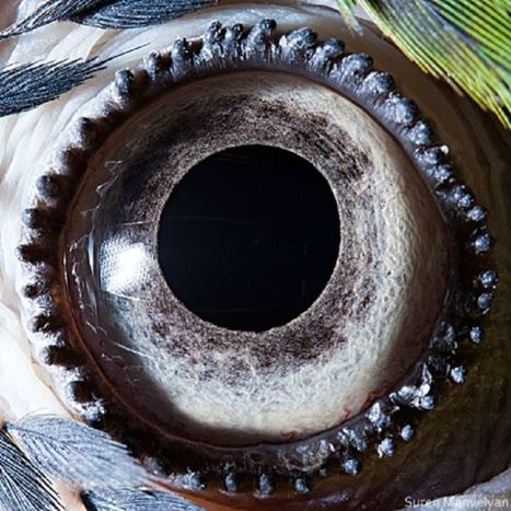En images : des yeux d'animaux splendidement photographiés | Biodiversité | Scoop.it