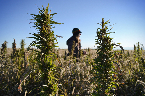 Why America's fired up about hemp - Salon | Food Security | Scoop.it