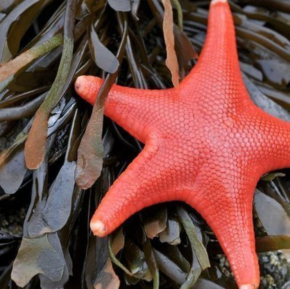 Nature Blows My Mind! The Colorful and Bizarre World of Starfish | OUR OCEANS NEED US | Scoop.it