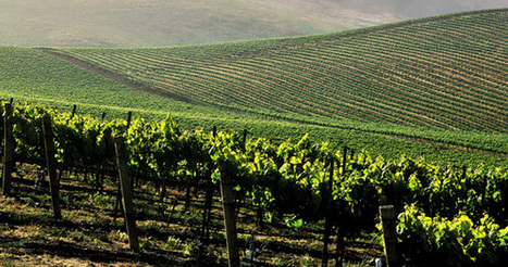 Monsanto's Glyphosate Found in California Wines, Even Wines Made With Organic Grapes | Vitabella Wine Daily Gossip | Scoop.it