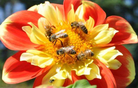 Les députés interdisent l'insecticide qui tue les abeilles   Sciences et techniques   Scoop.it