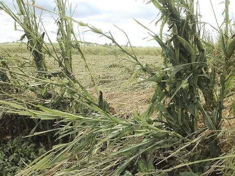 Southwest Idaho growers salvaging crops hit by hail - Capital Press | Agriculture | Scoop.it