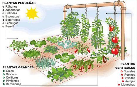 La huerta de un metro cuadrado | Ecocosas | Educacion, ecologia y TIC | Scoop.it