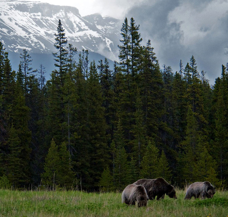 Learn How to Camp Safely In Bear Country | Exploring the Rocky Mountians | Scoop.it