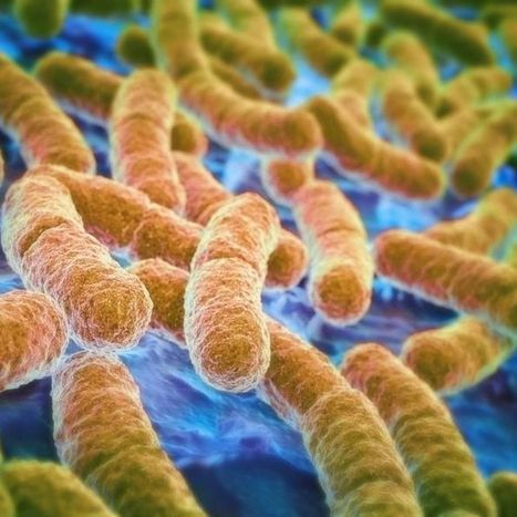 Gene that makes bacteria resistant to last-resort antibiotics found in China | Together we can make a difference to help our,environment,Oceans,Nature and wildlife. | Scoop.it