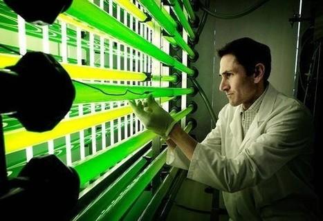 Un nueva técnica utiliza la captura de CO2 para alimentar cultivos de microalgas — Noticias de la Ciencia y la Tecnología (Amazings®  / NCYT®) | Engineering news | Scoop.it