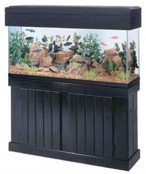 Home Aquarium Tanks and Alzheimer's dementia - Alzheimers Support   Alzheimer's Support   Scoop.it