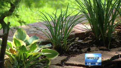 Some common plants can ward off mosquitoes, reduce West Nile threat - KVUE   Plant Based Transitions   Scoop.it