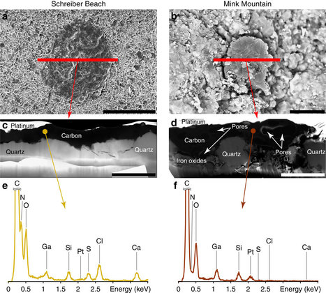 Precambrian Protein Identified | Conformable Contacts | Scoop.it