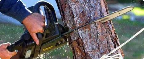 Tree Removal Tips: Five Things to Keep in Mind | Tree Removal Tips and Methods from the Expert Contractors here in Marietta | Scoop.it