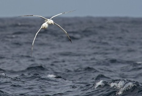 #Plankton make #scents for #seabirds and a cooler planet | Rescue our Ocean's & it's species from Man's Pollution! | Scoop.it