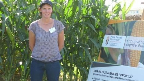 Variétés de maïs Euralis | Agriculture | Scoop.it