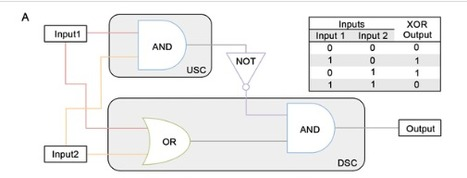 A Formalized Design Process for Bacterial Consortia That Perform Logic Computing | SynBioFromLeukipposInstitute | Scoop.it
