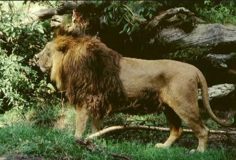 Top 5 Reasons To Explore Indian Wildlife | Wildlife of India | Scoop.it