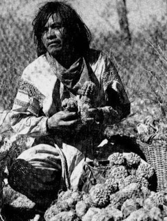 A Brief History of Peyote | Shaman hallucinogenic plants | Scoop.it