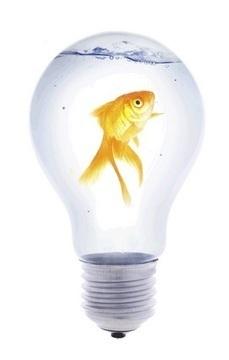 Business Innovation | Innovative Management | Dianna Greford | Scoop.it