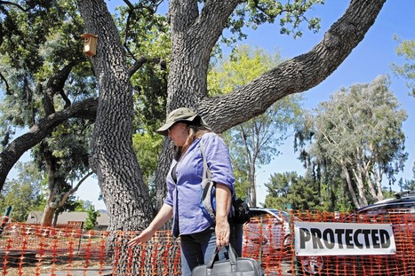 Thousand Oaks redevelopment sparks public outcry to save the trees - Los Angeles Times | La HighLine de Cannes | Scoop.it