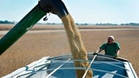 Argentina: Los costos del maíz crecieron mas que el precio del grano | Maíz | Scoop.it