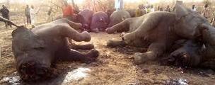 ECONOMIE: La lutte contre le braconnage: Une réalité en Afrique | Chasse, Braconnage et Droits des Animaux | Scoop.it