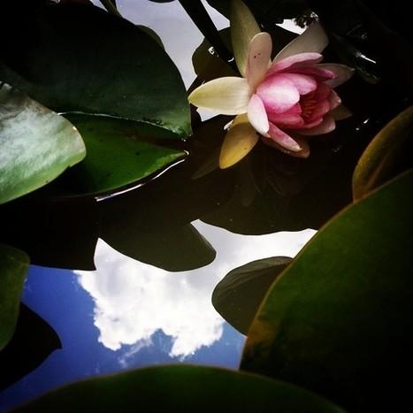 Art and Archive — Oak Alley Plantation 2014 #flower #reflection... | Oak Alley Plantation: Things to see! | Scoop.it
