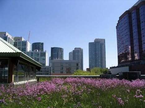 Glancing at a grassy green roof significantly boosts concentration   Brain Tricks: Belief, Bias, and Blindspots   Scoop.it