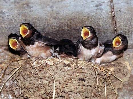EN IMAGES. Apprenez à reconnaître les oiseaux des jardins   Territoires apprenants, sciences participatives, partages de savoirs   Scoop.it