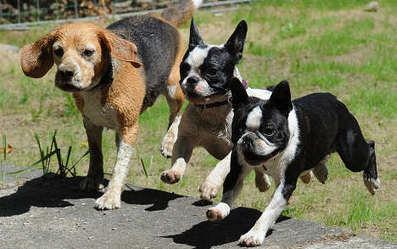 Vets: Dogs overdose on drug-user poop | Quite Interesting News | Scoop.it