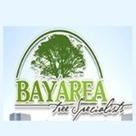 San Jose Tree Service: Why Dead Trees Have to Go and Why Call on Pros   Bay Area Tree Specialists   Scoop.it