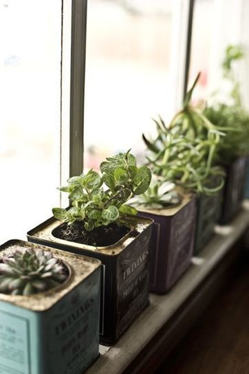 Make little planters for a windowsill garden from old tea tins | Gardening Green | Scoop.it