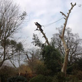 Tree Surgery Bracknell - Brackenll Tree Felling | UK Directory | Scoop.it