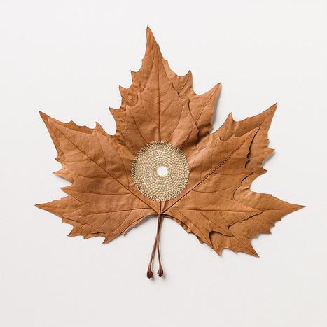 Fragile Crocheted Leaf Sculptures by Susanna Bauer | Bouche à Oreille | Scoop.it
