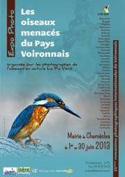 Exposition : les oiseaux menacés du Pays Voironnais   LPO Isère   En Mode Voiron   Scoop.it